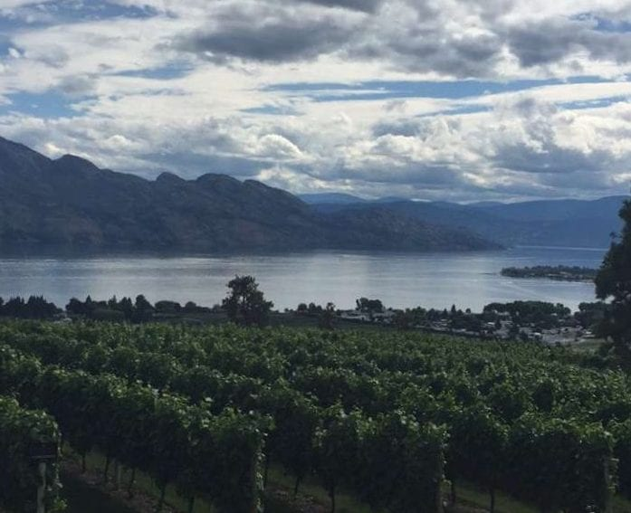 a vineyard overlooking the lake and mountains